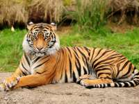 Wildlife cheapest air fare in india